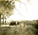 Cattle on the Cyrus S. Avery farm, east of the city, Tulsa, Oklahoma
