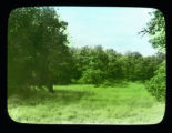 Trees and grassland
