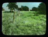 Grassland and trees near fence line